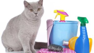 A grey and white cat sitting on a table Description automatically generated